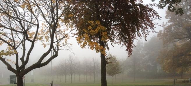 Nearherewayaway misty trees