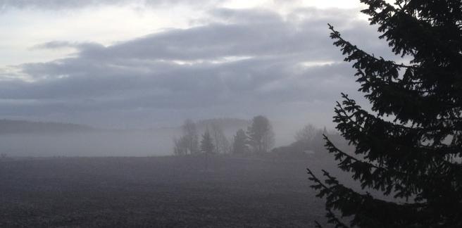 nearherewayaway misty field and trees