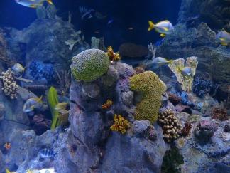 reef-452882_1920