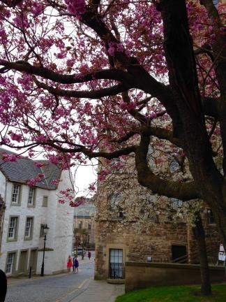 Nearherewayaway Linlithgow cherry