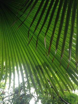 So many palm trees