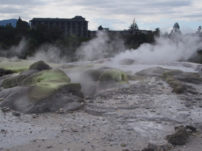There are three active geysers in Te Puia