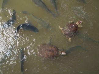Turtles were friendly but the fish ate their food