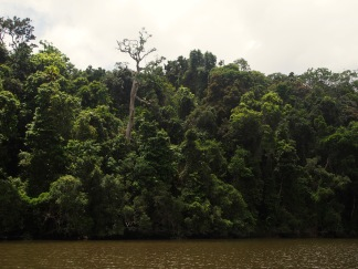 Even if you can't see it, the rainforest is full of life