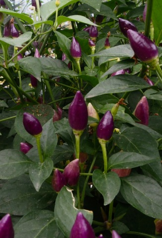 Plants thrive in the care of Eden gardeners