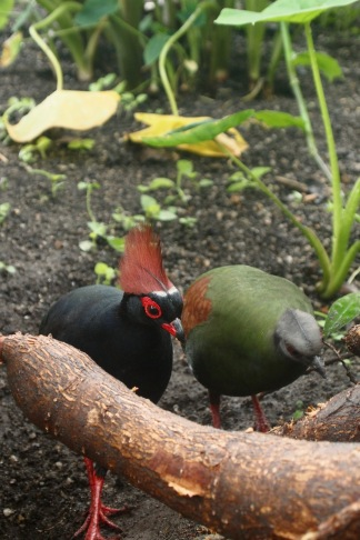 Roul-roul partridges as well as a few other bids, bugs, and frogs work as pest controllers