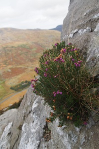 Leave the Heather Ledge trail when the route starts to circle the mountain following the contour lines