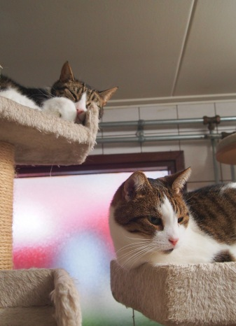 These cats live on a canal boat