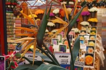Flower market brightens the streets