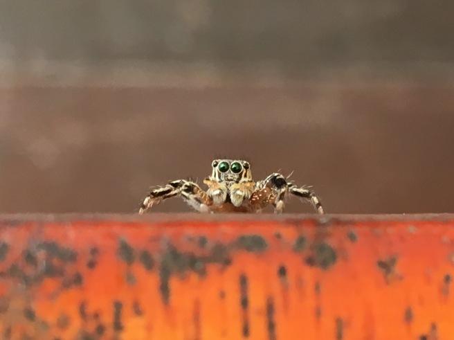 Nearherewayaway  spider 2112