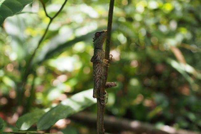 Nearherewayaway lizard