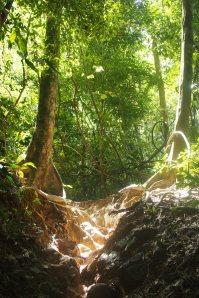 Nearherewayaway jungle 2