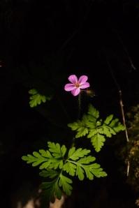 Nearherewayaway Purple flower