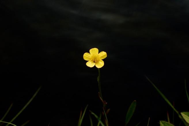 Nearherewayaway yellow flower