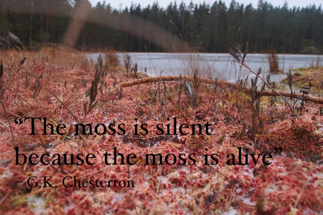 Frozen pink moss by a lake, quote by Chesterton
