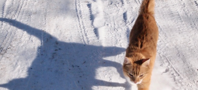Cat and his reflection on snow