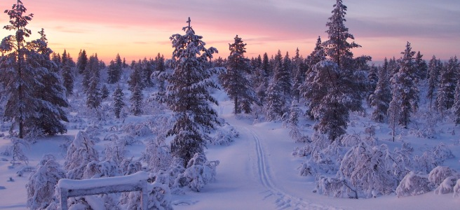 Skiing tracks through a snowy forest
