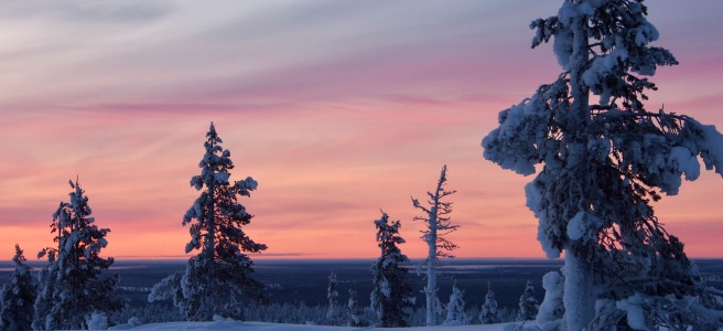 Pink sky above a snowy landscape in Lapland