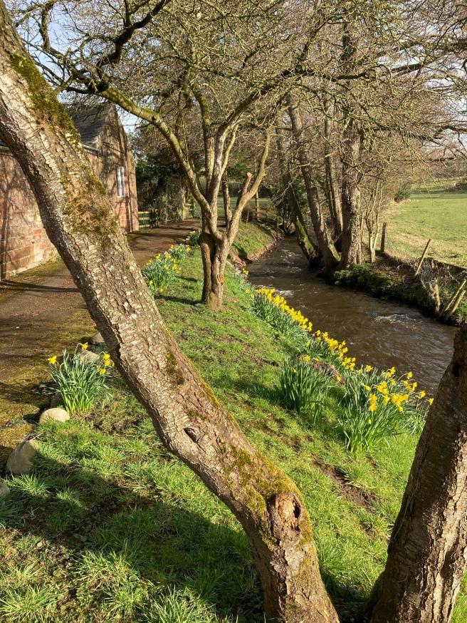 Springtime river
